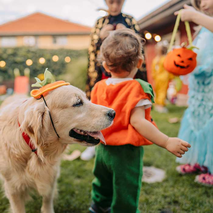 10 ways to celebrate Halloween during COVID-19