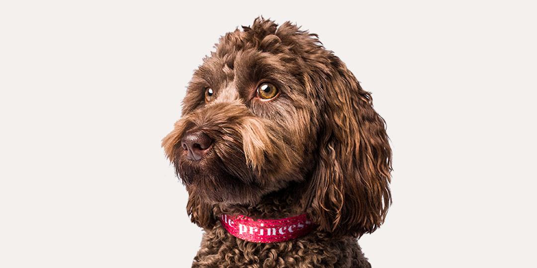 Pet Collars image